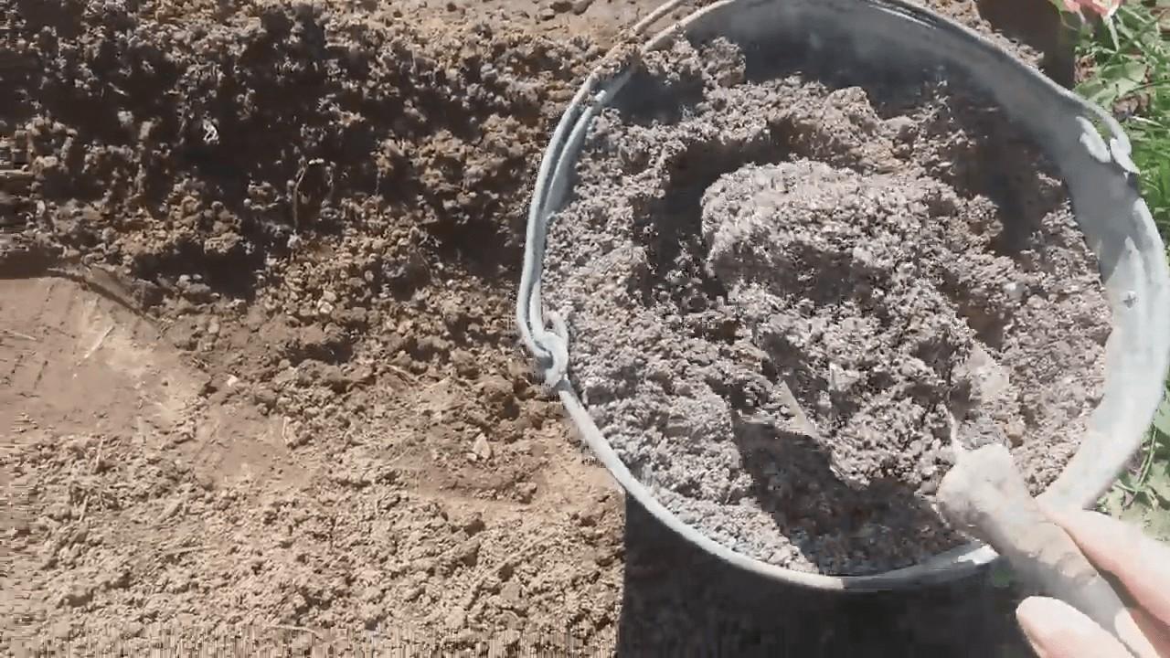 Как садить свеклу семенами в открытом грунте