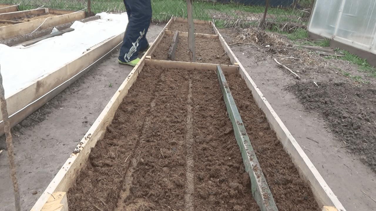 Как правильно подготовить и посадить лук севок на грядку