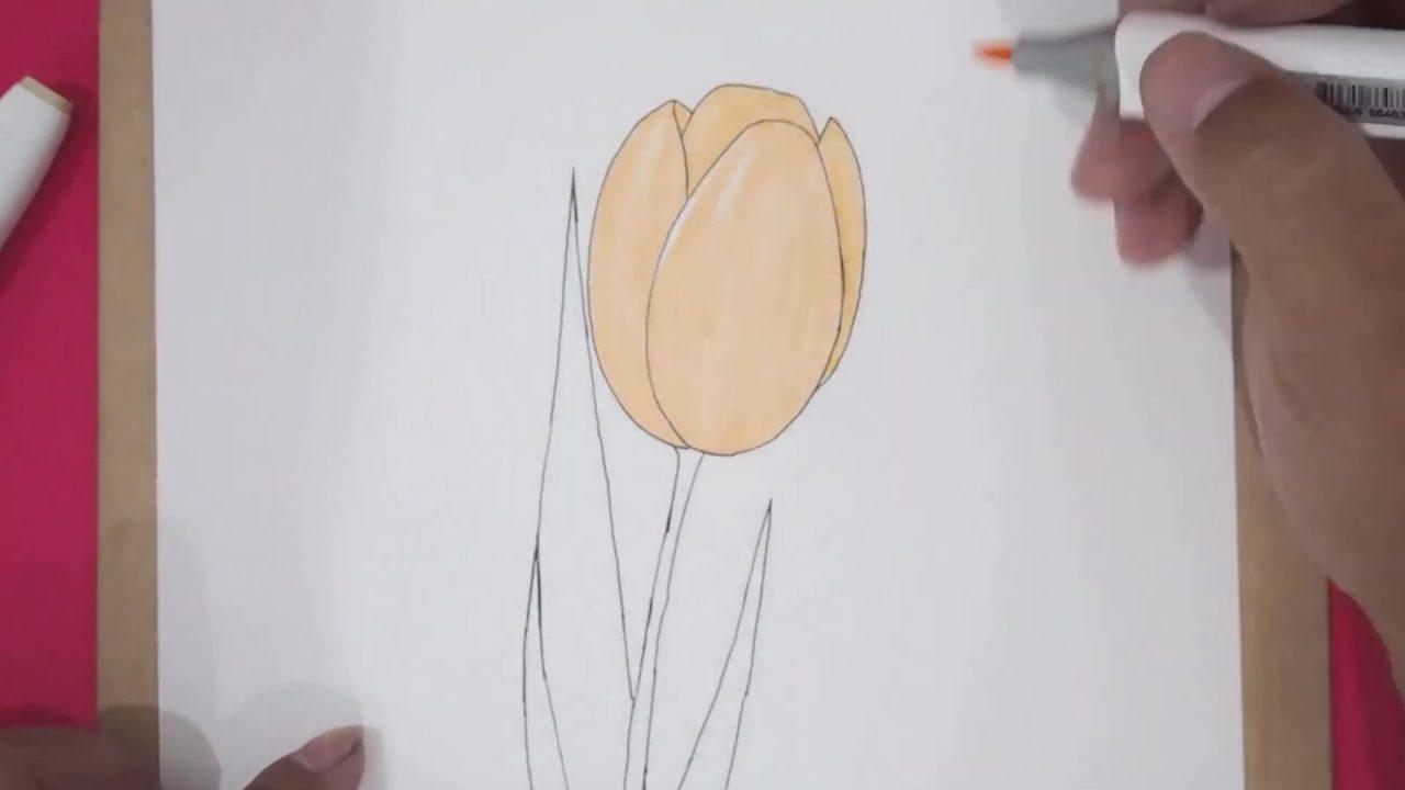 Рисуем тюльпан карандашом и разукрашиваем фломастерами