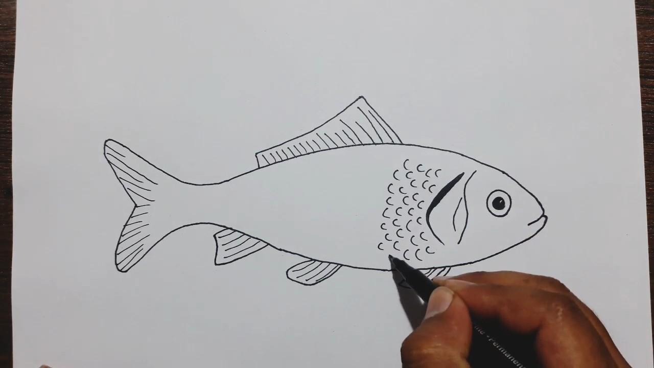 Как нарисовать рыбку карандашом