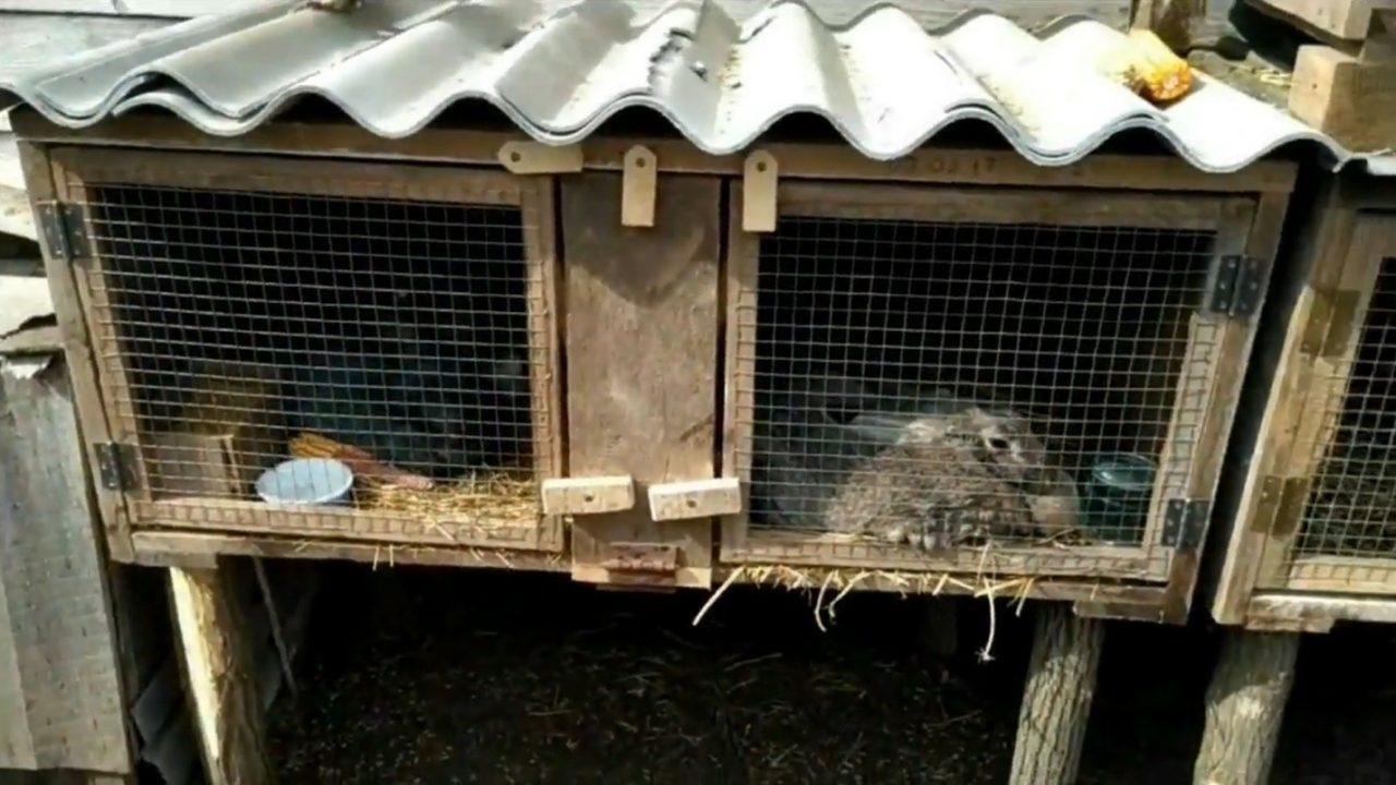 Строим бюджетную клетку для кроликов своими руками