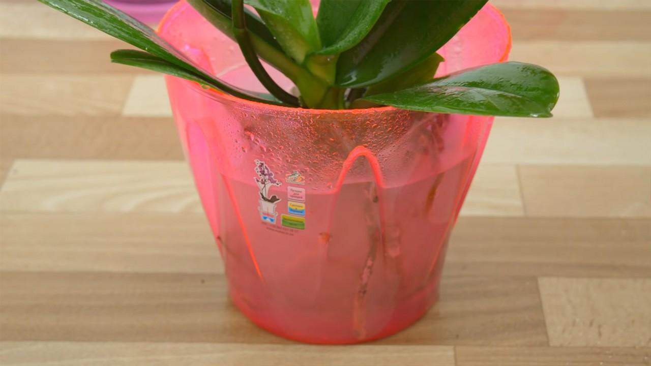 Как правильно пересадить орхидею в другой горшок