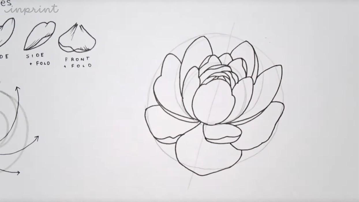 Рисуем пионы карандашом реалистично