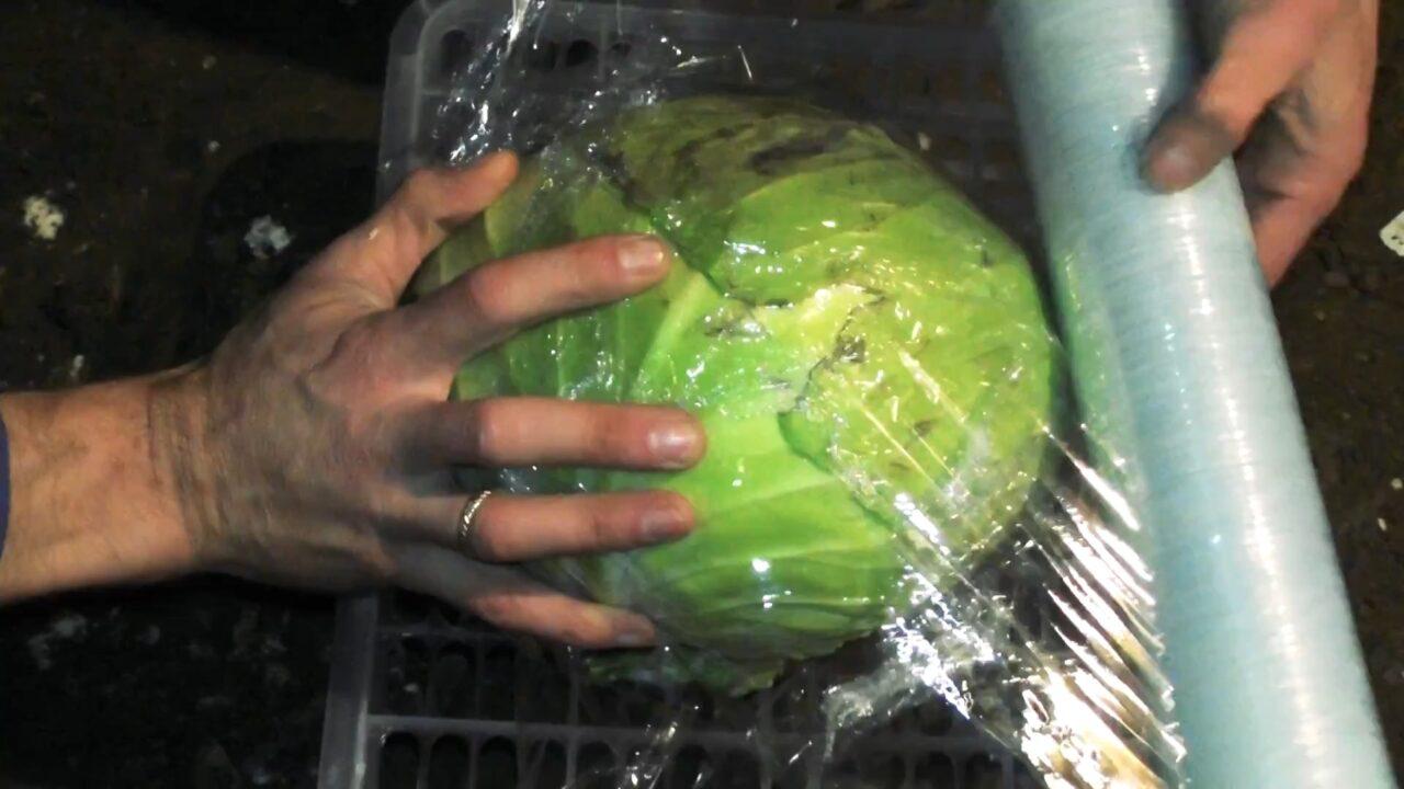 Как сохранить свежую капусту надолго