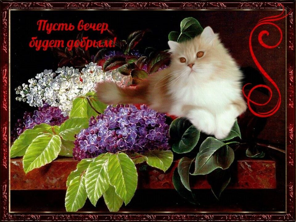 Доброго вечера! 116 приятных картинок-открыток