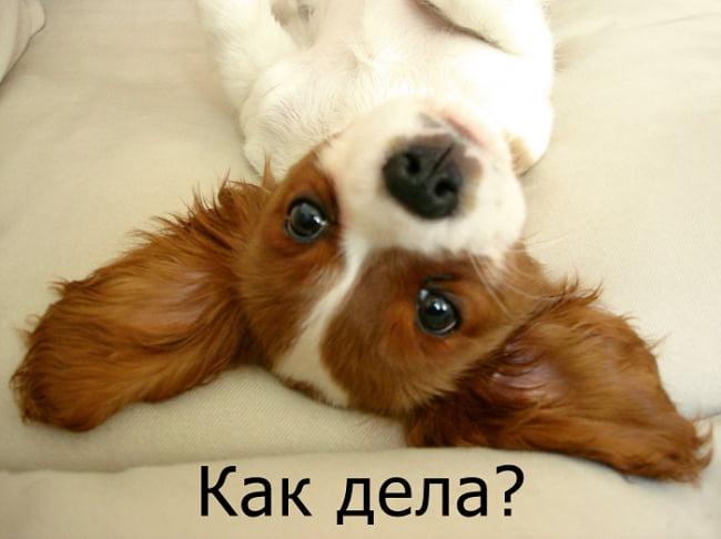Привет, как дела? 160 оригинальных открыток