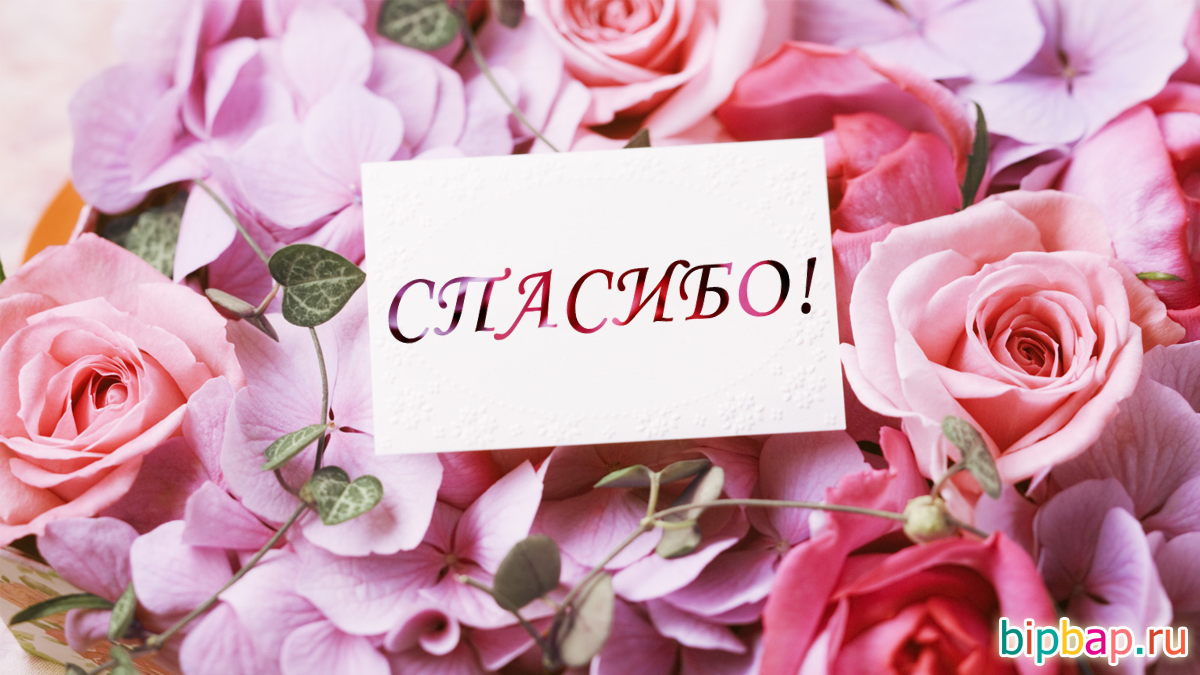 Спасибо моя дорогая! 105 открыток