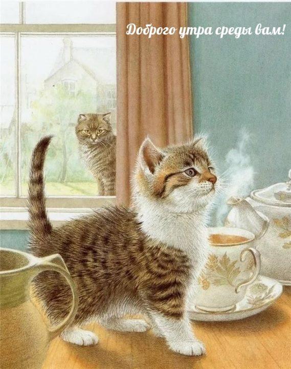 98 прикольных открыток с добрым утром среды