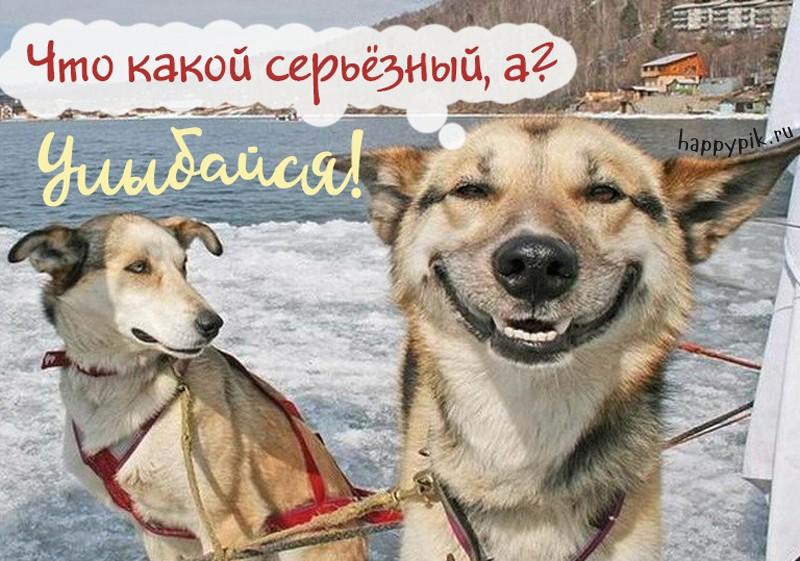 Улыбнись и не грусти! 160 прикольных улыбчивых картинок-открыток