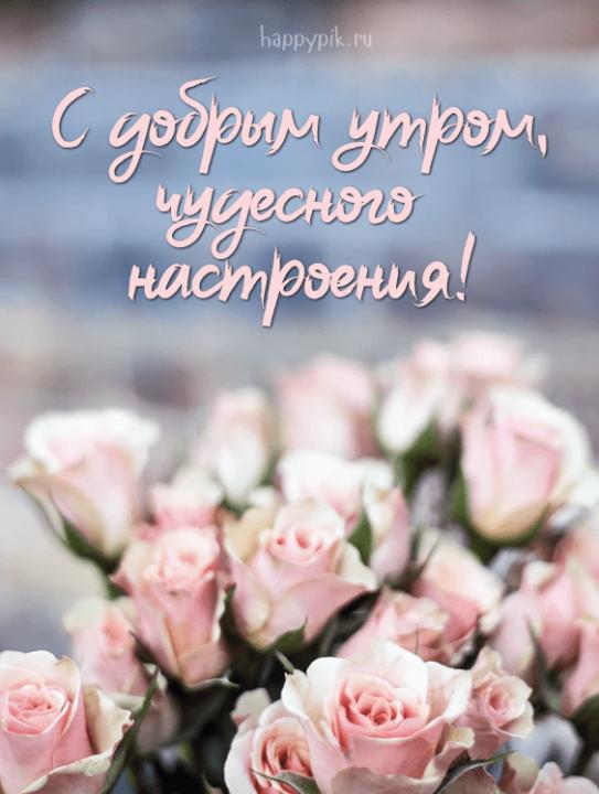 140 красивых открыток «С добрым утром!»