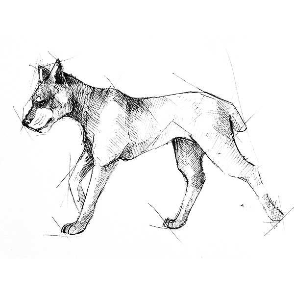 190 картинок собак нарисованных карандашом и не только