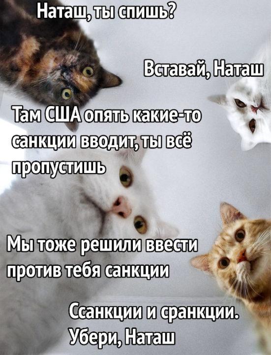 150 картинок со смешными котами. Прикольные фото с надписями
