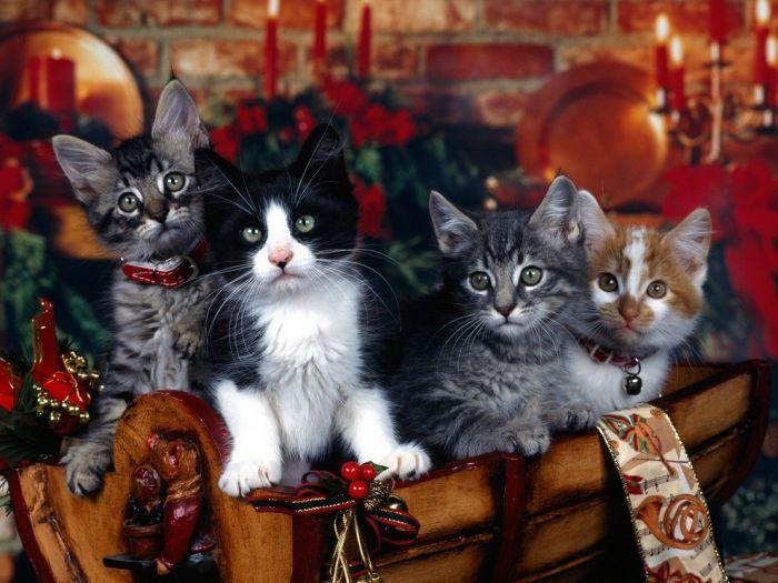 230 картинок с красивыми и пушистыми котятками