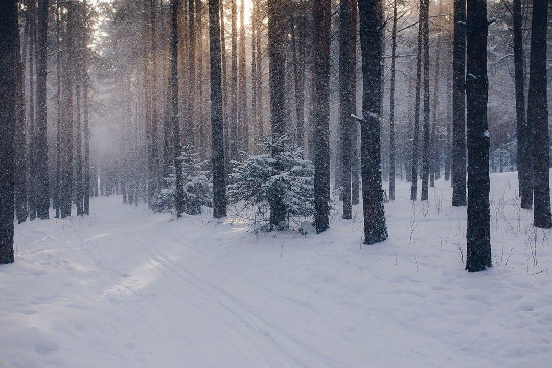 160 красивых фото зимы