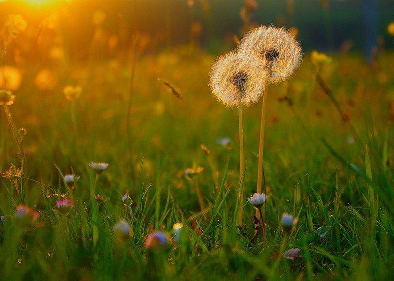 66 красивых утренних открыток с природой