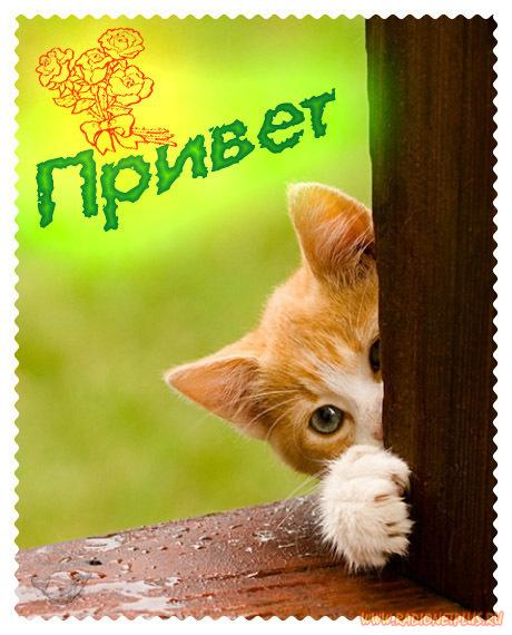 Привет, приветик! 190 красивых открыток с надписями