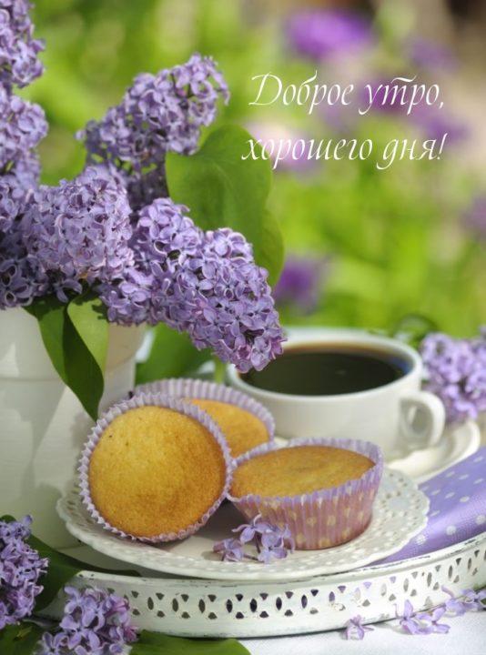 С добрым весенним утром! 150 красивых открыток