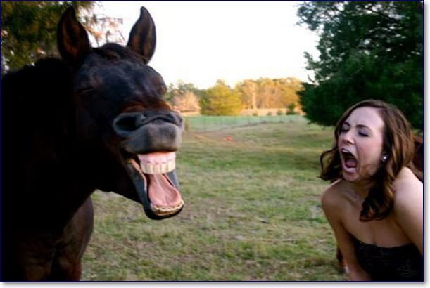 300 самых смешных фотографий людей