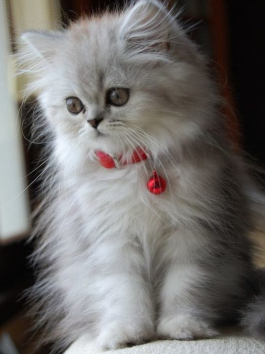 224 картинок котят и кошек. Мимимишность зашкаливает