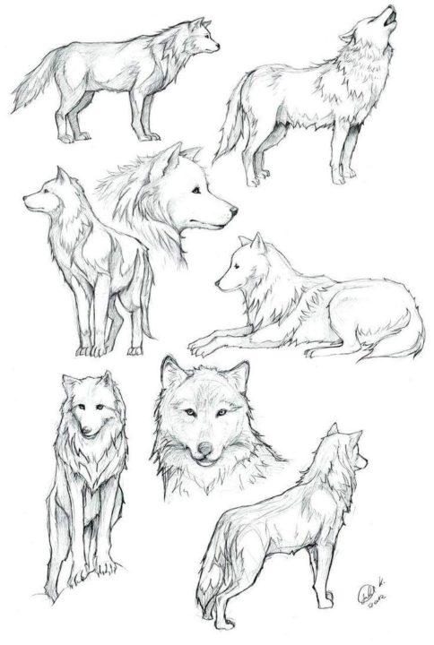 115 рисунков волка карандашом
