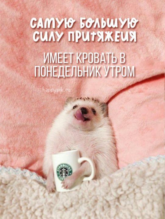 С добрым утром понедельника и хорошей недели! 160 открыток