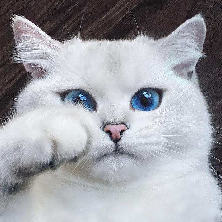 180 картинок с котиками на аву