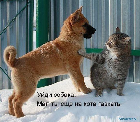 290 смешных картинок с собаками. Фотки с надписями и без