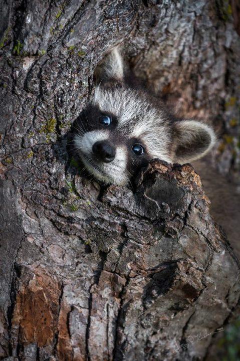 170 милых картинок животных