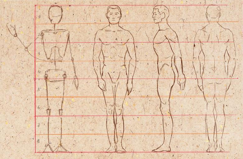 35 рисунков тела человека