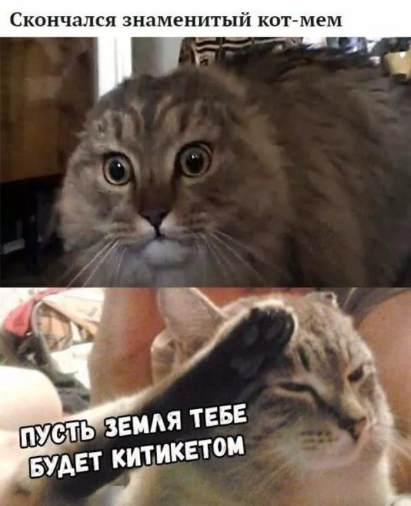 80 мемов про котиков