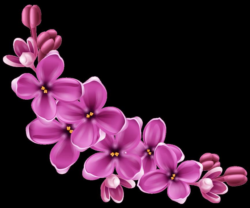 130 цветов png без фона