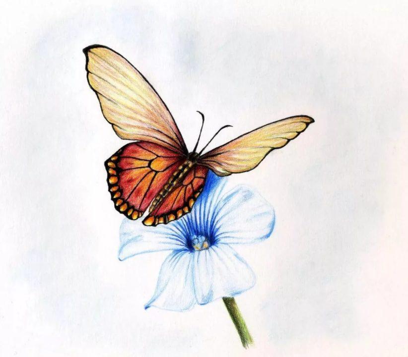 Как нарисовать бабочку: 60 рисунков для детей
