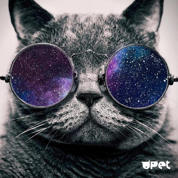 105 картинок с котами в очках