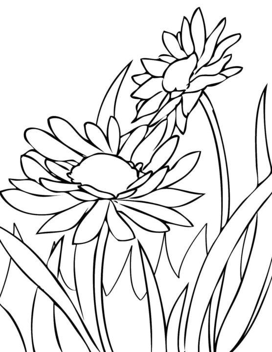 75 раскрасок с цветами для детей